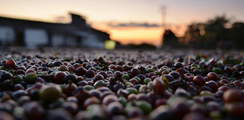 Vilket land producerar mest kaffe?