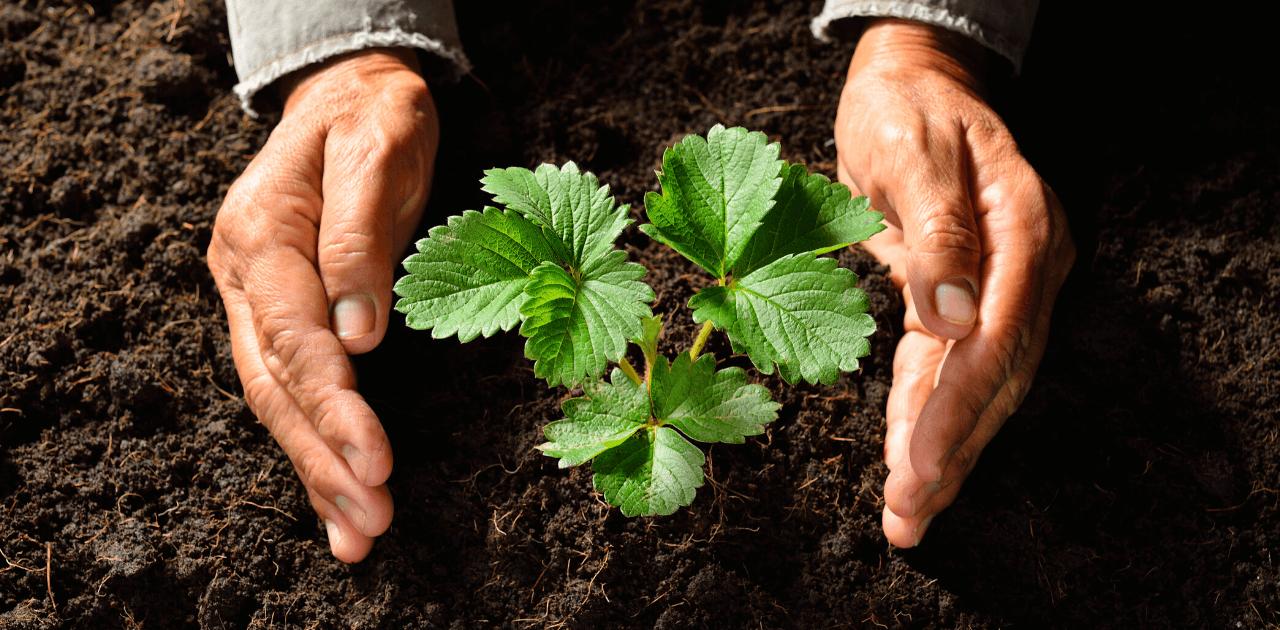 Kaffesump som gödning – ett miljösmart val