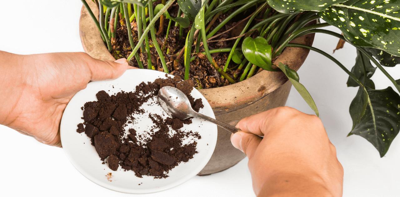5 saker att göra med överblivet kaffe
