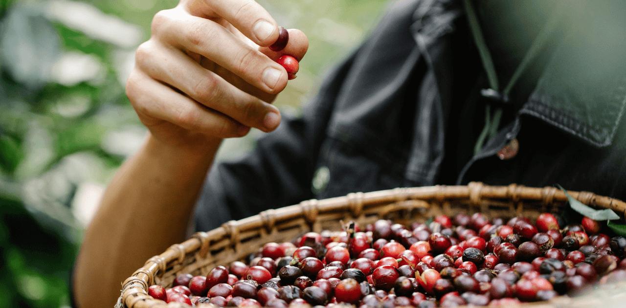 En närmare titt på kaffeodlingar i världen